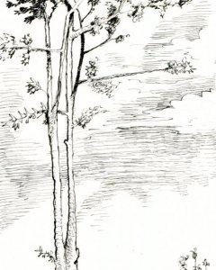 a Thin Tree